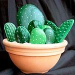 Композиция из кактусов